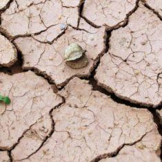 Susza – czy grozi nam brak wody?
