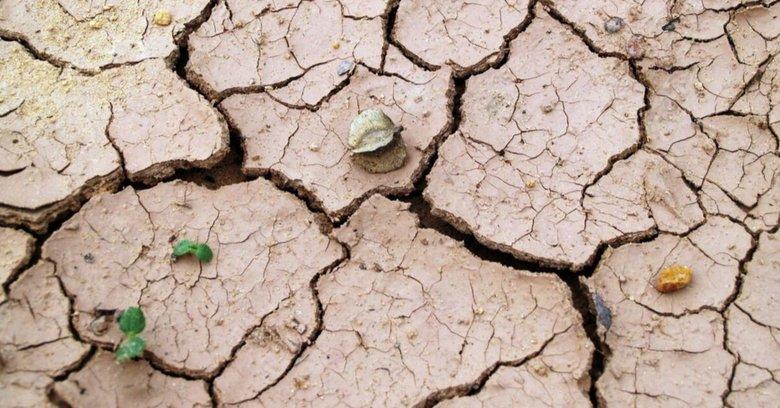 Susza - czy grozi nam brak wody? | Monika Rosa